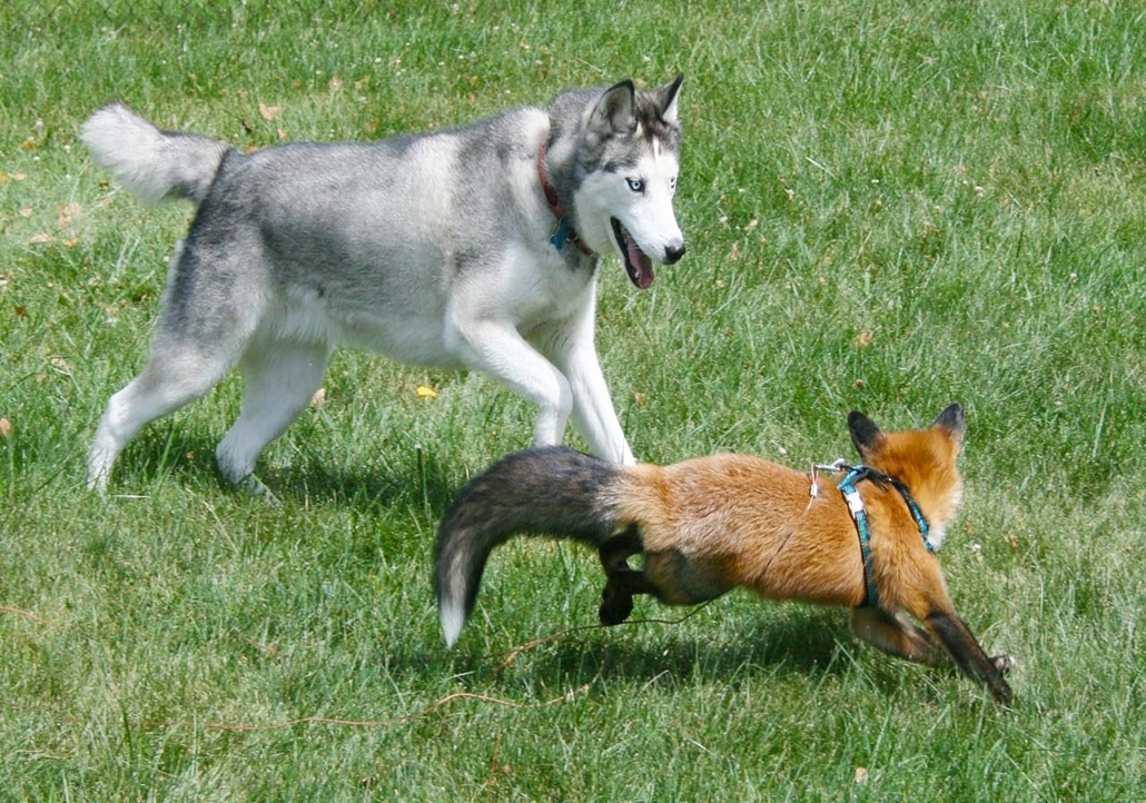 the-quick--brown-fox-jumps-ove